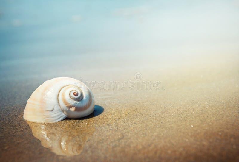 Seeoberteil auf dem Meer und dem sandigen Strand verwischte Hintergrund Schreiben Sie Y lizenzfreies stockfoto