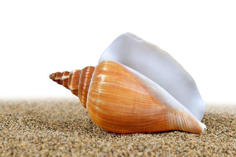 Seeoberteil auf dem Sand stockfotos