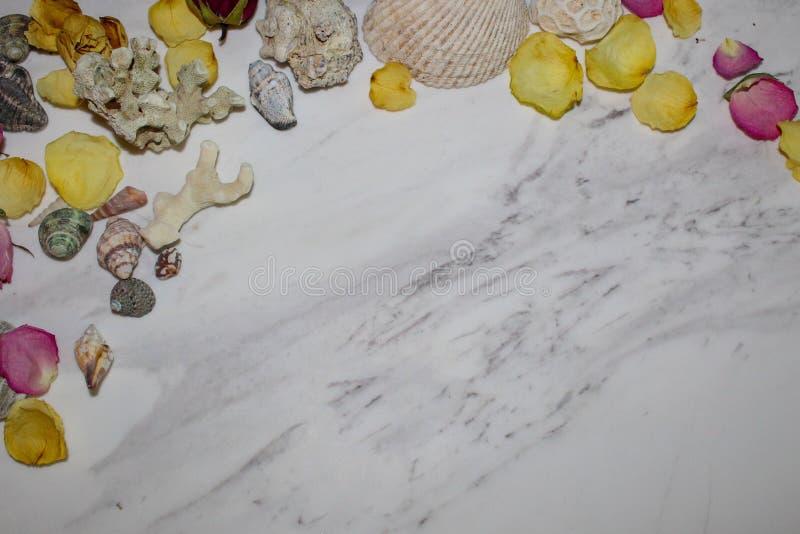Seeoberteil und Blumenblumenblattrahmen stockfoto