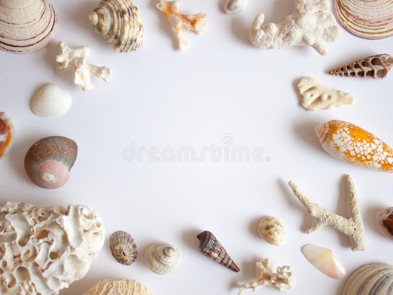 Seeoberteil- und -korallenrahmen stockfoto