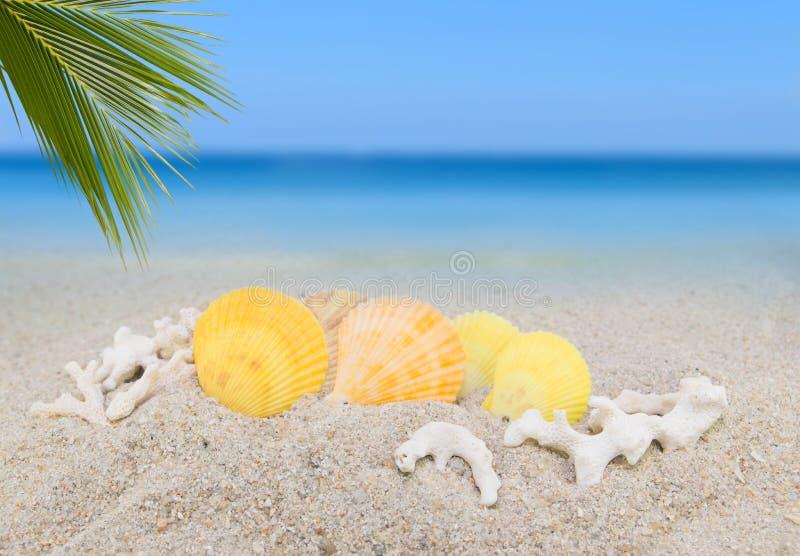 seeoberteile und kokosnusspalmblatt auf sand setzen hintergrund collec auf den strand stockfoto. Black Bedroom Furniture Sets. Home Design Ideas