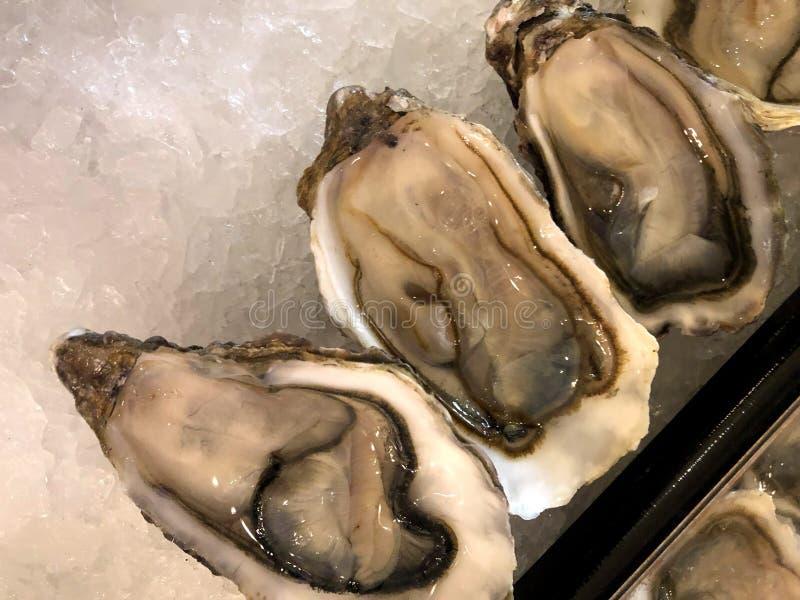 Seeprodukt Austern frisch auf Eis Von einer Reihe einzigartigen Fotos stockfotografie