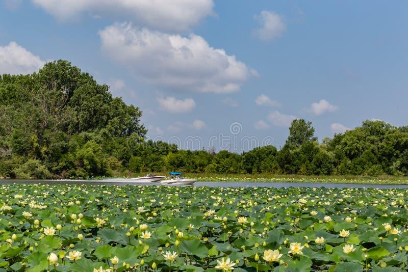 Seeroseanlagen auf Carter Lake Iowa Motor-Booten, die sich kreuzen lizenzfreie stockbilder