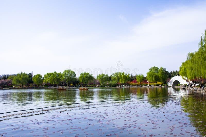Seerosen auf dem See, Weiden im Vorfrühling und bunte Blumen lizenzfreie stockbilder