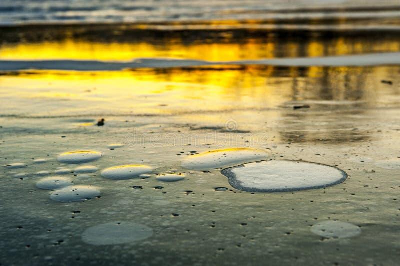Seerosen im Eis lizenzfreie stockbilder