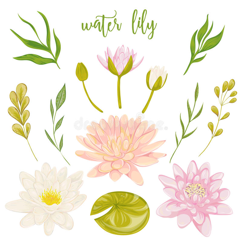 Seerosesatz Dekorative mit BlumenGestaltungselemente der Sammlung für Heiratseinladungen und Glückwunschkarten stock abbildung