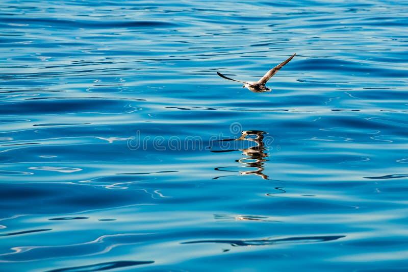 Seeschwalbe widergespiegelt im meeres- gerade ein Moment, Schnappschuß stockfotos