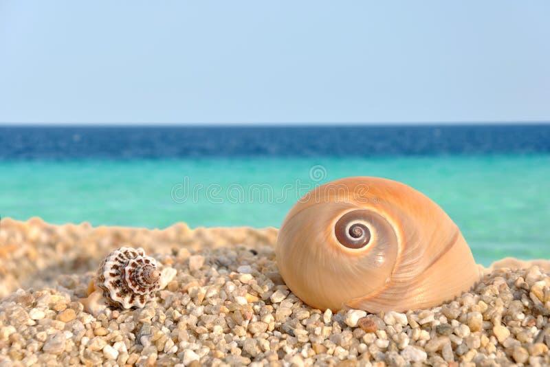Seeshells auf dem Strand stockfoto