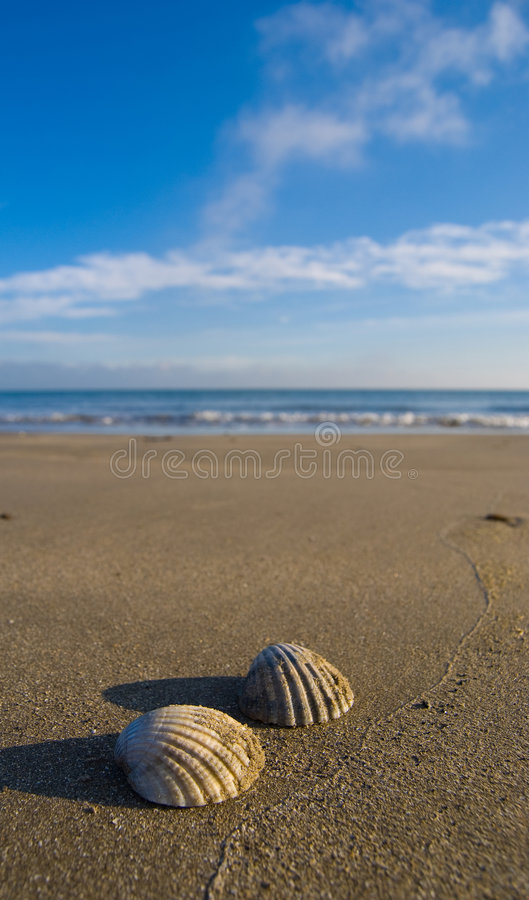 Seeshells auf dem Strand lizenzfreies stockbild