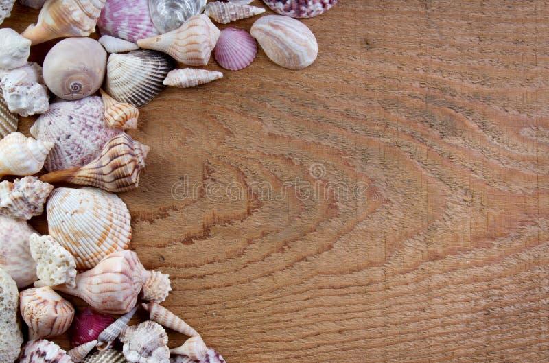 Seeshells auf einem hölzernen Hintergrund stockfotografie