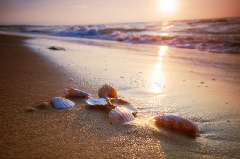 Seeshells auf Sand lizenzfreie stockfotografie