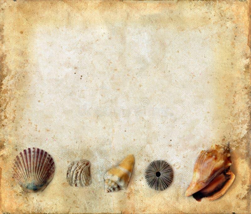 Seeshells auf Unterseite eines Grunge Hintergrundes lizenzfreies stockfoto