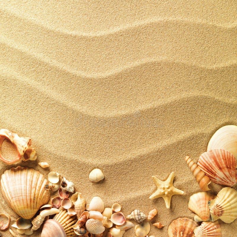 Seeshells mit Sand lizenzfreie stockfotos