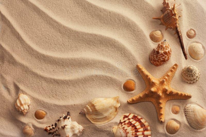 Seeshells mit Sand stockfoto