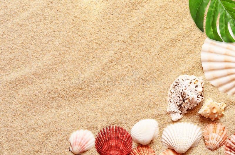 Seeshells mit Sand als Hintergrund stockfoto