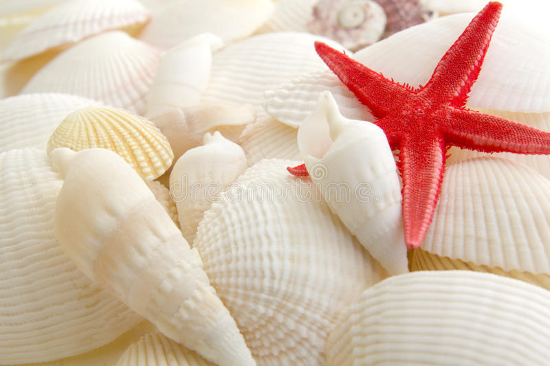 Seeshells und -Starfish stockfotos