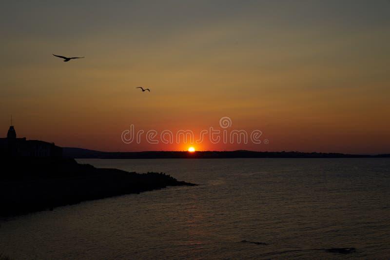 Seesonnenuntergang mit Möven stockfotos