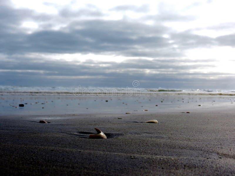 Seespray Schöner mutiger Strand stockfotografie