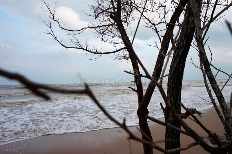 Seeufer und -bäume stockfotografie