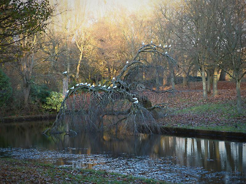 Sefton-Park - schöner Herbst, lässt Fall von den Bäumen vektor abbildung