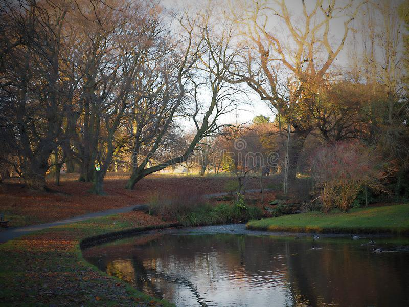 Seftonpark - de mooie herfst, bladerendaling van bomen royalty-vrije illustratie