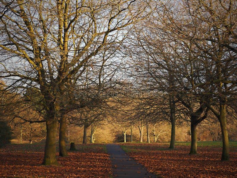 Seftonpark - de mooie herfst, bladerendaling van bomen stock illustratie