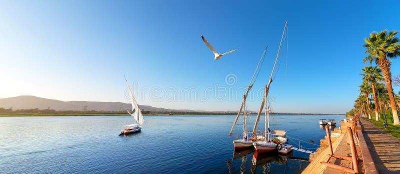 Segelbåt i Aswan fotografering för bildbyråer