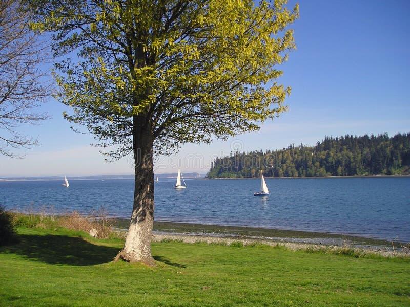 Segelboote auf dem Puget Sound stockfotografie
