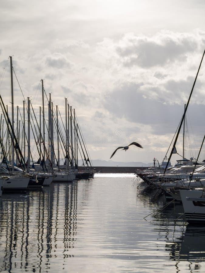 Segelboote im Hafen mit den Möven, die herum fliegen lizenzfreie stockbilder
