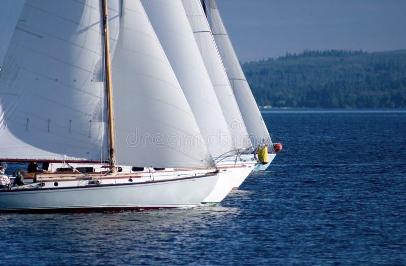 Segelbootrennen stockbilder