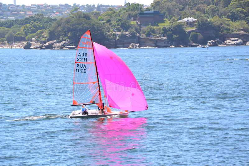 Segla på den Sydney hamnen royaltyfri fotografi