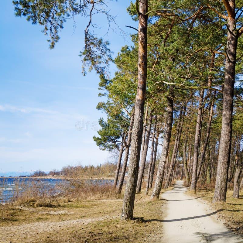 Segla utmed kusten av det baltiska havet royaltyfria foton