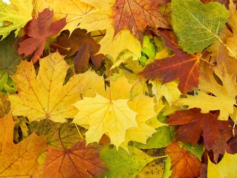 Segment de mémoire de lames d'automne photographie stock