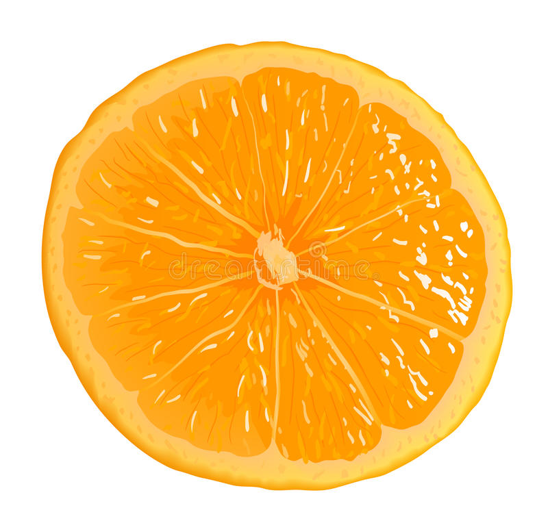 Segment orange illustration stock