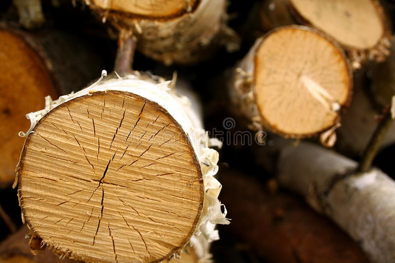 Segmented birch tree, background royalty free stock photography