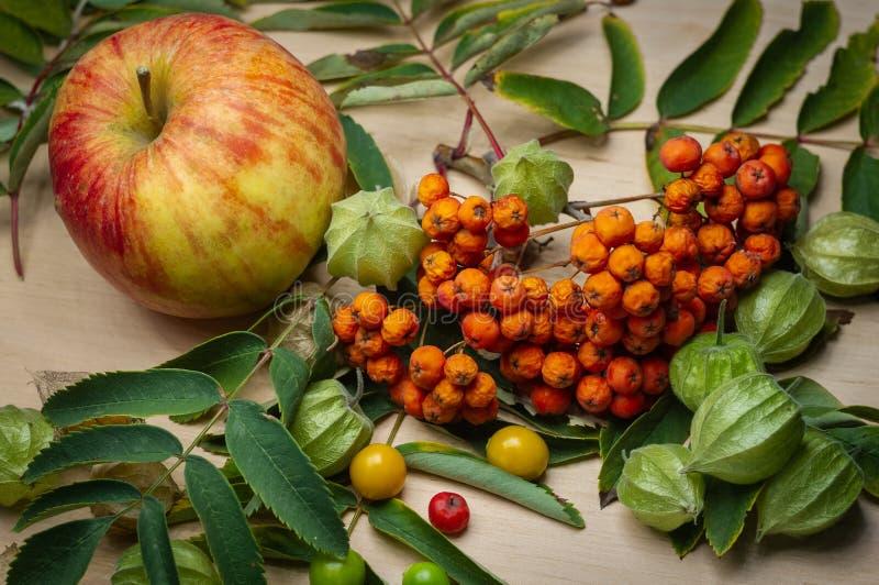 Segmenty halny popiół, owoc, jagody, wielki jabłko zdjęcia royalty free