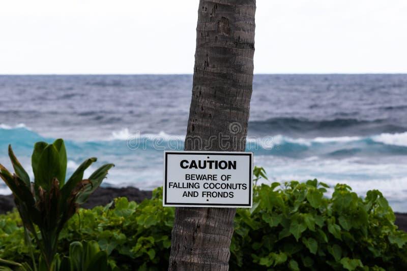 Segnale di pericolo sulla palma alla spiaggia di sabbia nera in Hawai Piante verdi e spuma dell'oceano nei precedenti fotografie stock