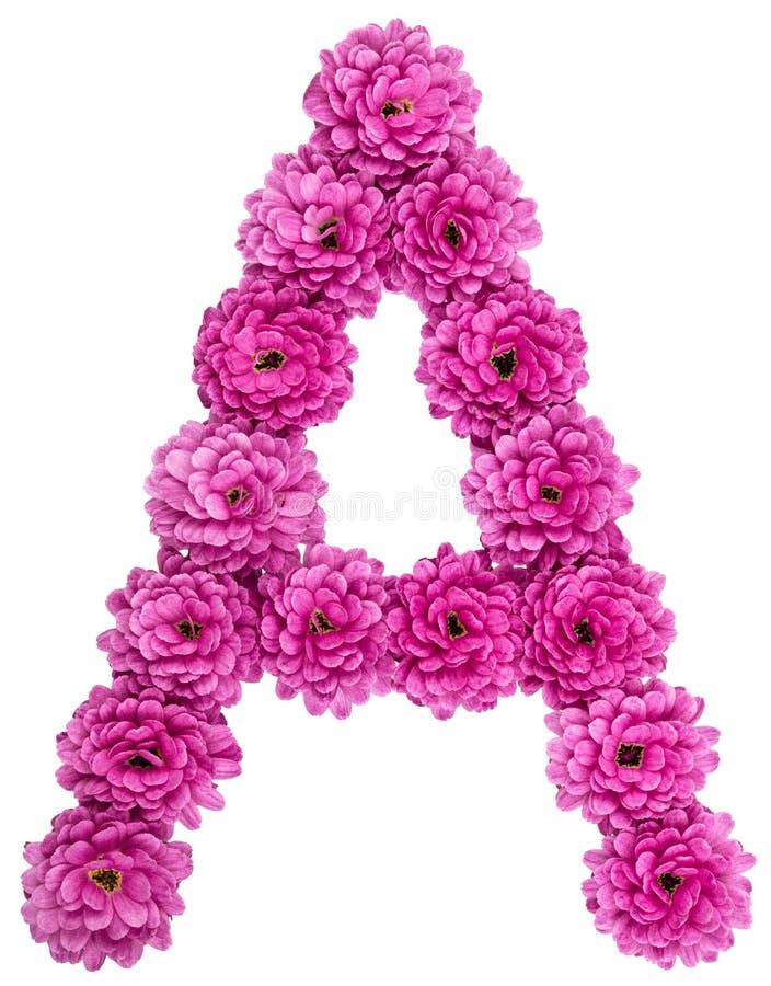 Segni A con lettere, l'alfabeto dai fiori del crisantemo, isolati su wh fotografia stock libera da diritti