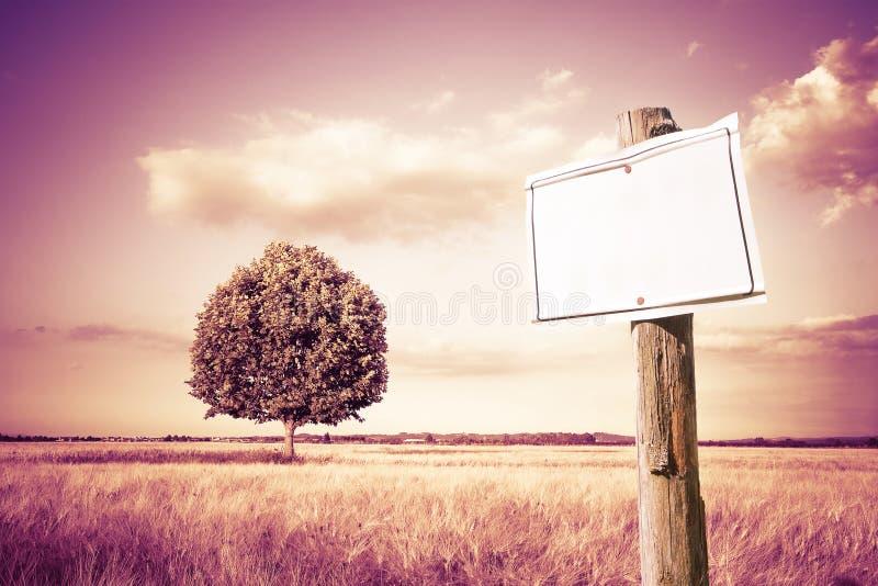 Segno in bianco di legno che indica contro un giacimento di grano nel coun immagine stock libera da diritti