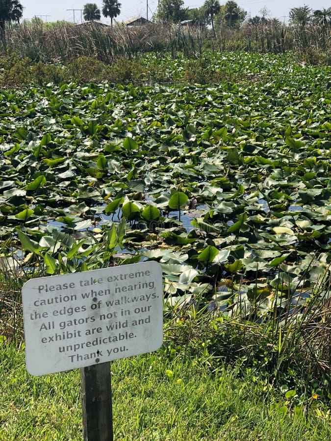 Segno del pericolo per gli alligatori ad uno stagno immagini stock libere da diritti