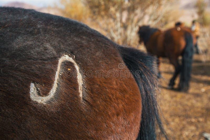 Segno del primo piano sulla groppa del cavallo mongolo della Mongolia occidentale animale fotografia stock libera da diritti