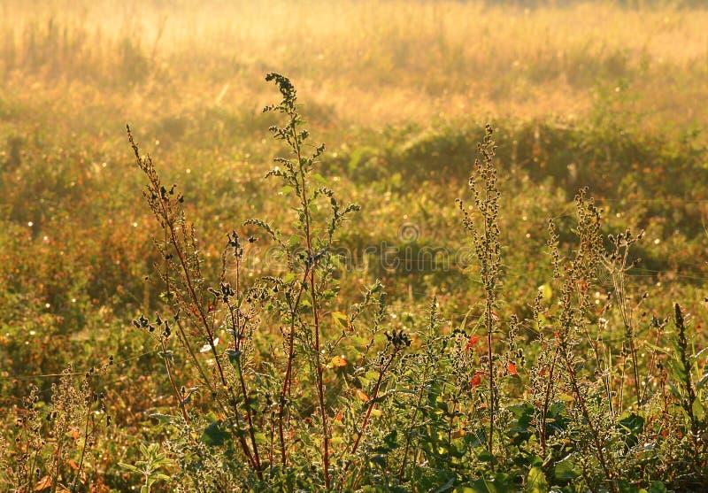 Segno della mussola di autunno fotografie stock