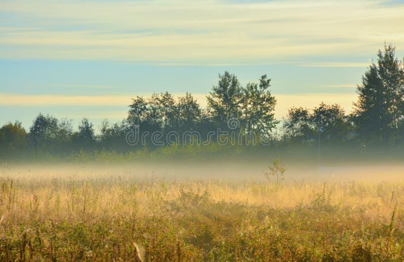 Segno della mussola di autunno immagini stock