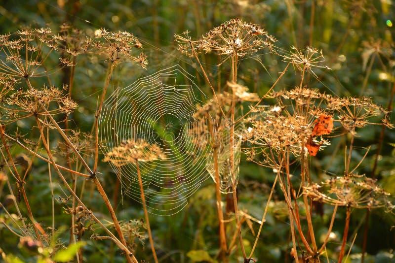 Segno della mussola di autunno fotografia stock