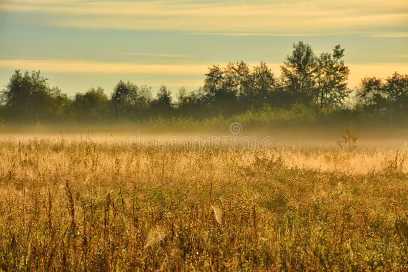 Segno della mussola di autunno fotografie stock libere da diritti