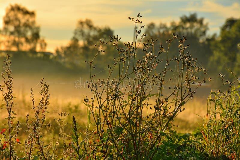 Segno della mussola di autunno fotografia stock libera da diritti