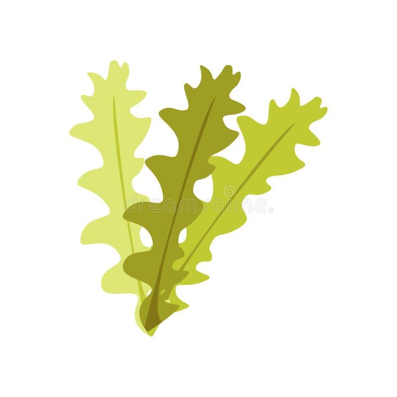 Segno e simbolo di vettore dell'icona dell'alga isolati su fondo bianco, concetto di logo dell'alga illustrazione vettoriale