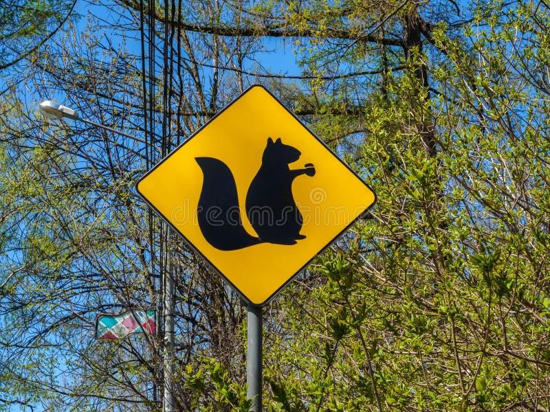 Segno giallo con un'immagine degli scoiattoli fotografia stock