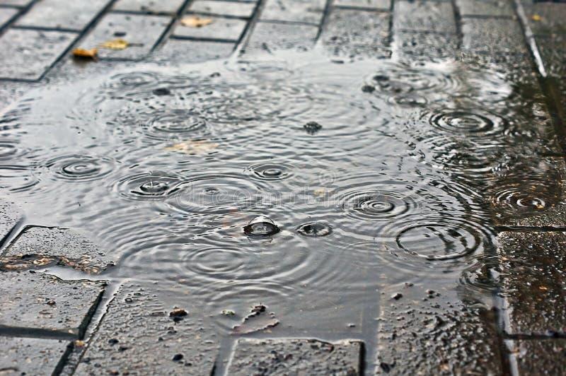 Seguito da pioggia nella pozza di autunno immagini stock libere da diritti