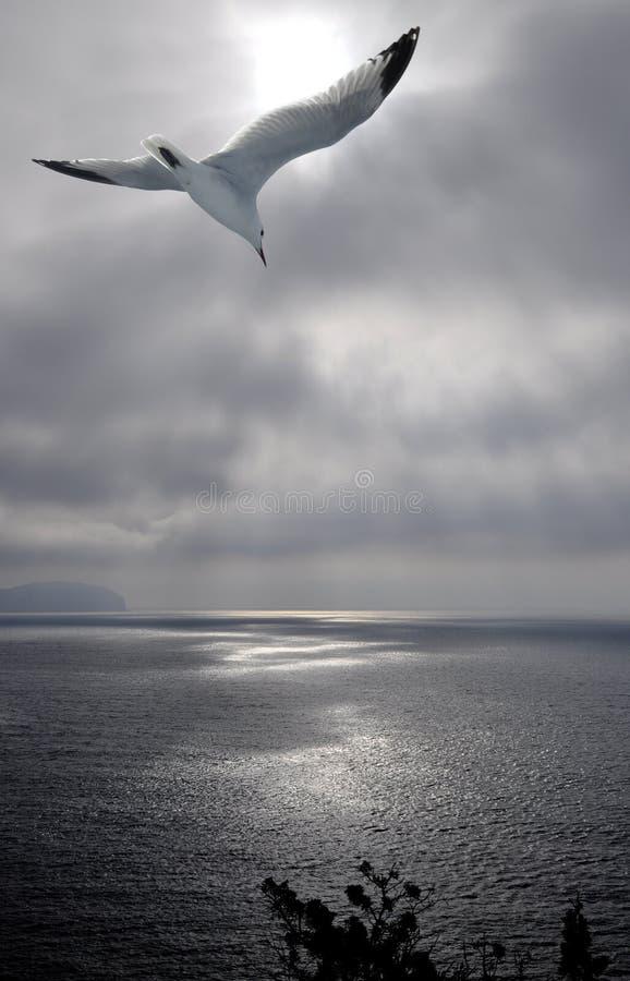 Segull en el mar fotografía de archivo libre de regalías